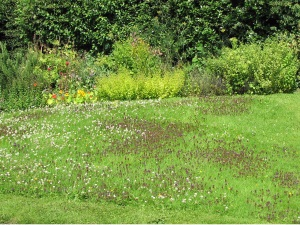 Unmown section of lawn