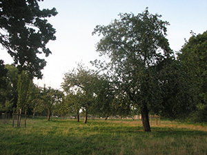 The Orchard at The Old Rectory
