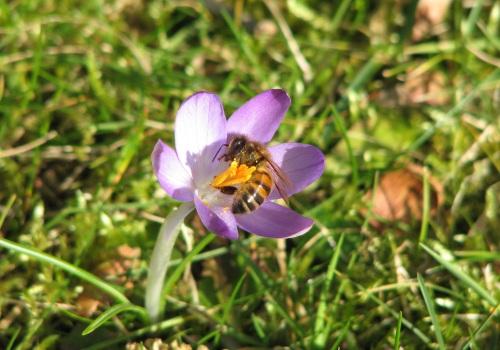 Spring forage