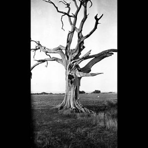 Dead Tree, Romney Marsh, 1930-34