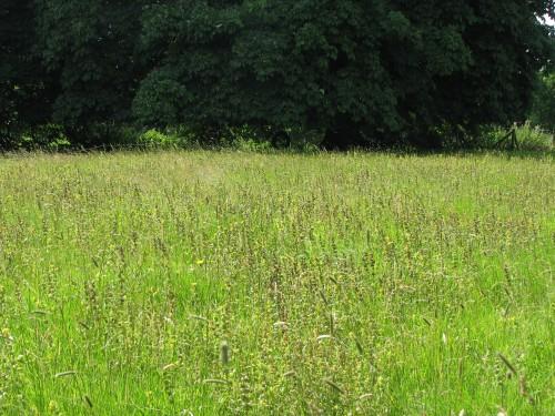 Caroline's meadow
