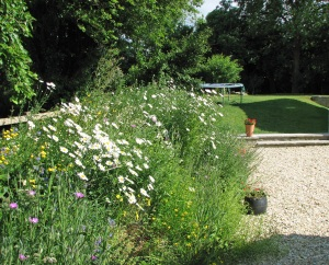 Wildflower Bank
